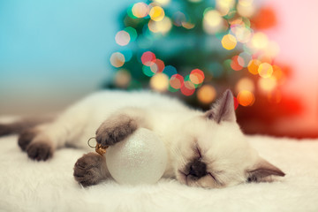Little kitten sleeping with christmas ball against christmas tree with lights