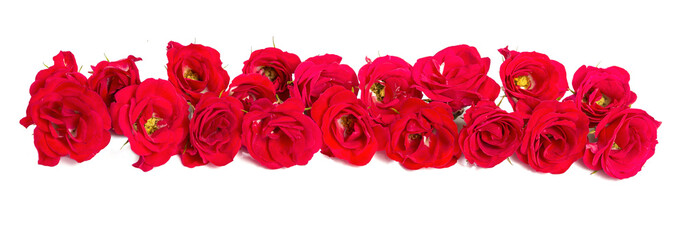 Bouquet of roses arranged to form of a border or design element for floral themes.