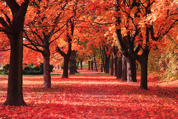Wall Murals Red color autumn forest