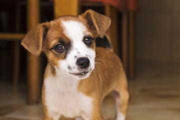 little puppy
