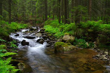 Stream in the wood