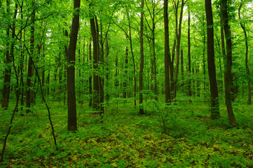 beautiful green forest