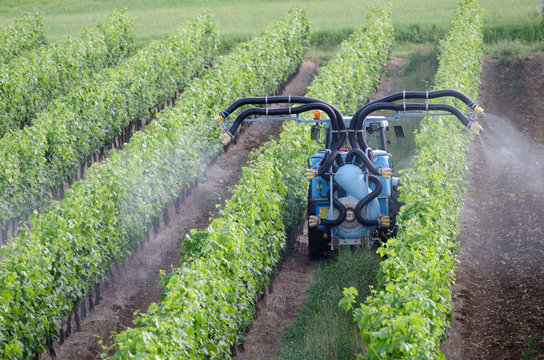 Spraying of grapevines in vineyard in france