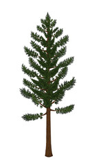 Pine tree vector from hand drawing.