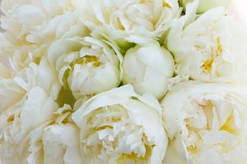 White peony flowers