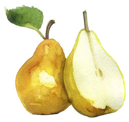watercolor sketch: pear on a white background