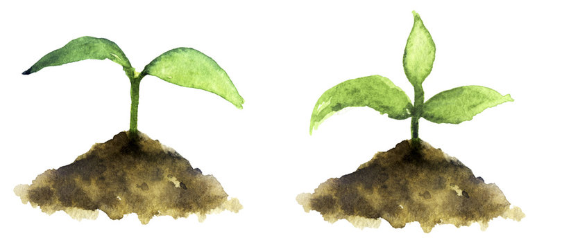 watercolor sketch: sprout on a white background
