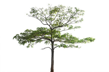 Tree with branch isolated, Clipping path