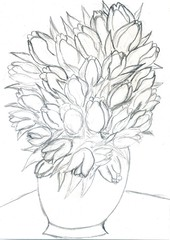 Tulips Pencil Sketch