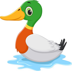 funny Cartoon duck swimming
