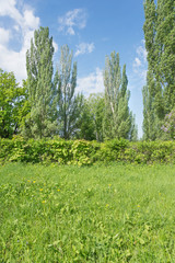 Green lawn in a park