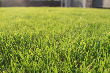 fresh green grass lawn in sunlight, landscaping in the garden, beauty of summer season