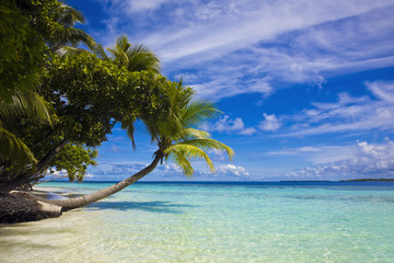 Maledivenstrand mit Palme