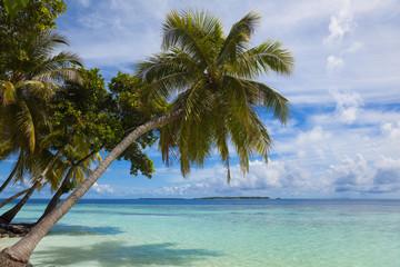 Maledivenstrand mit Palmen