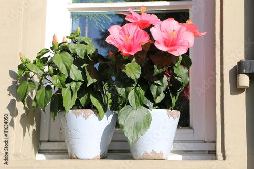 Zwei Blumentopfe An Einem Fenster Sommerliche Aussen Dekoration