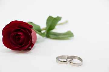 Red Rose, Engage ring with love in Valentines Day