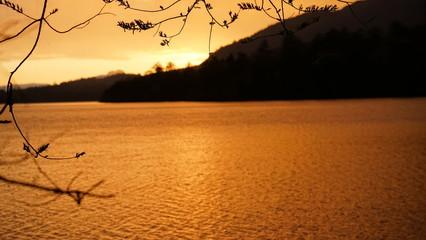 芽吹き、黄金色に輝く尾瀬沼