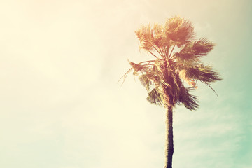 Palm trees against sky. retro style image