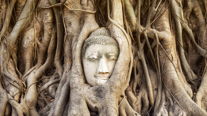 Buddha head in the tree roots at Wat Mahathat temple, Ayutthaya, Thailand.