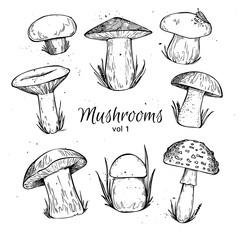 Hand drawn vector vintage illustration - Mushrooms. Vol 1