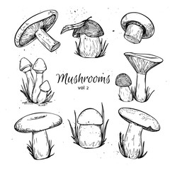 Hand drawn vector vintage illustration - Mushrooms. Vol 2.