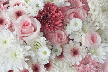 Background of pink and white daisies and roses