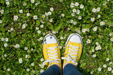 Yellow sneakers in a dasiy field. First person view