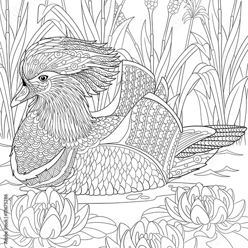 Quot Zentangle Stylized Cartoon Mandarin Duck Swimming Among