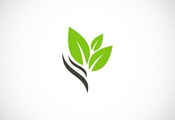 green leaf eco vector logo