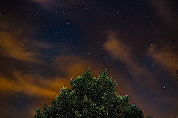 Arbre sous les étoiles