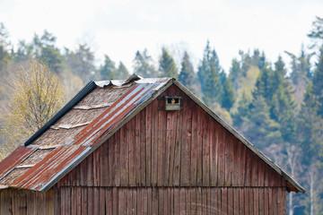 Kestrel in a nesting box on a barn