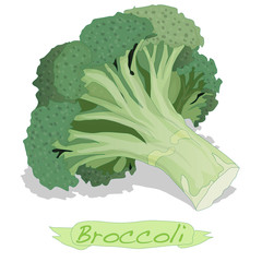 Broccoli vector isolated