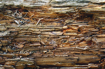 Dry rotten wood background