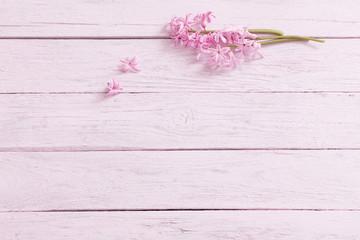 fresh flowers hyacinths on wooden background