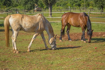 two horses (brown horse) horses on the ranch