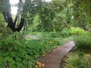 деревянная дорожка в парке