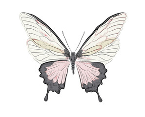 Pink butterfly