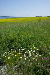 A field of flowers and bright green grasses on a clear blue sunny day.