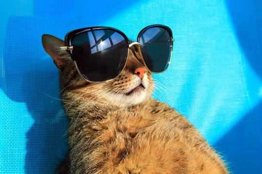funny cat wearing sunglasses relaxing in the sun, vacation, summer holidays, resort