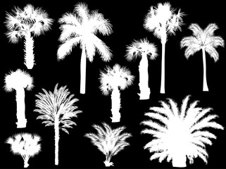 eleven palm silhouettes isolated on black