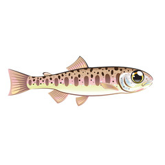 Baby trout cartoonified vector Art fish farm
