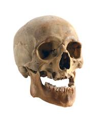 Old human skull.