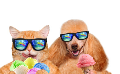 Cat and dog wearing sunglasses relaxing in the sea background. Red cat and dog eats ice cream. Isolated on white.