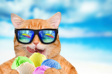 Cat wearing sunglasses relaxing in the sea background. Red cat eats ice cream.