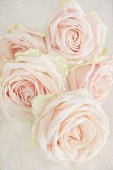 Beautiful fresh roses ,vintage style ,grunge paper background.