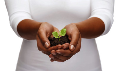african american woman hands holding plant in soil