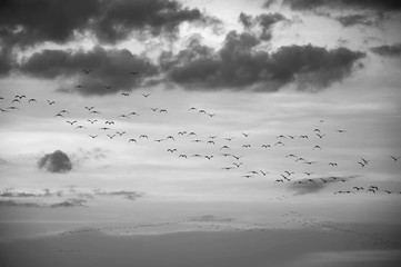 Crowd of birds flying in the sky