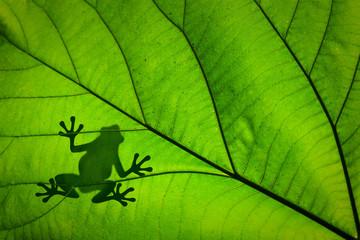 Silhouette d'une grenouille à travers une feuille verte