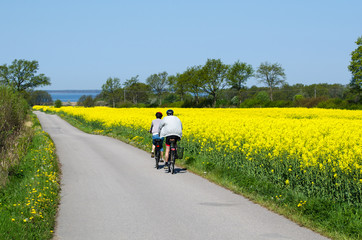 Cyclists in a spring colored landscape