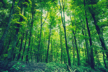 Forest in green colors